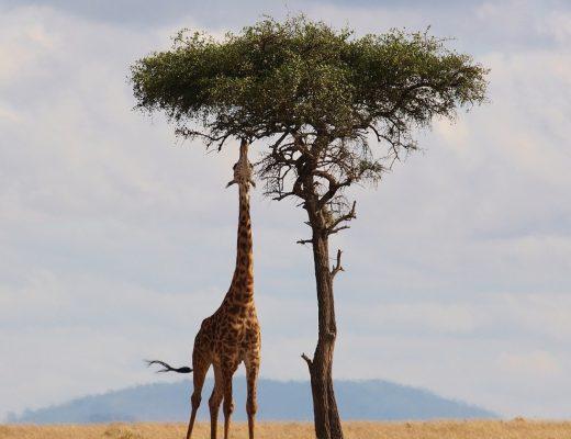 Pourquoi opter pour un safari privé à Tanzanie ?